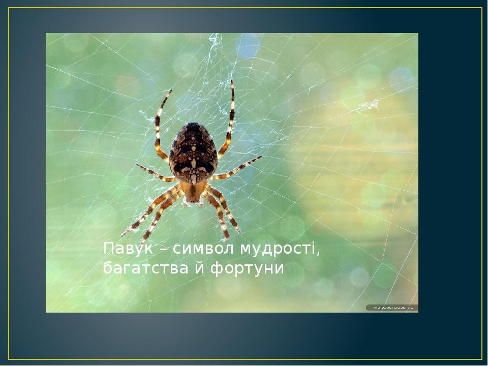 Павук – символ мудрості, багатства й фортуни