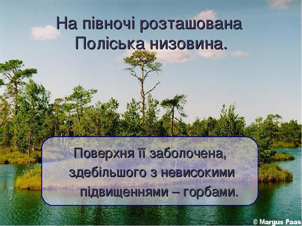 На півночі розташована Поліська низовина. Поверхня її заболочена, здебільшого з невисокими підвищеннями – горбами.