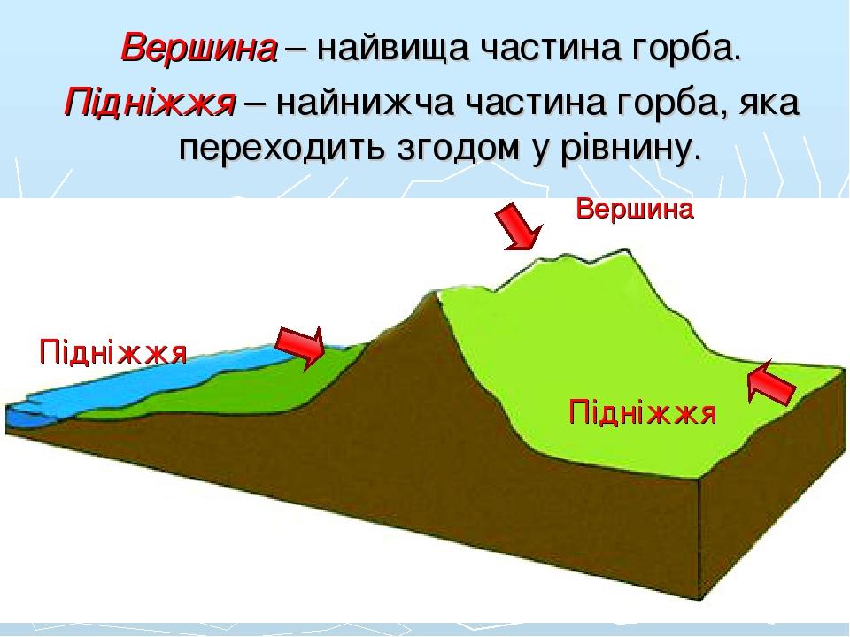 Вершина – найвища частина горба. Підніжжя – найнижча частина горба, яка переходить згодом у рівнину. Вершина Підніжжя Підніжжя