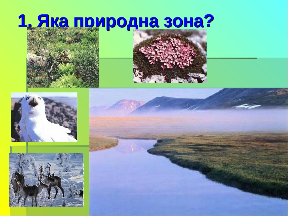 1. Яка природна зона?