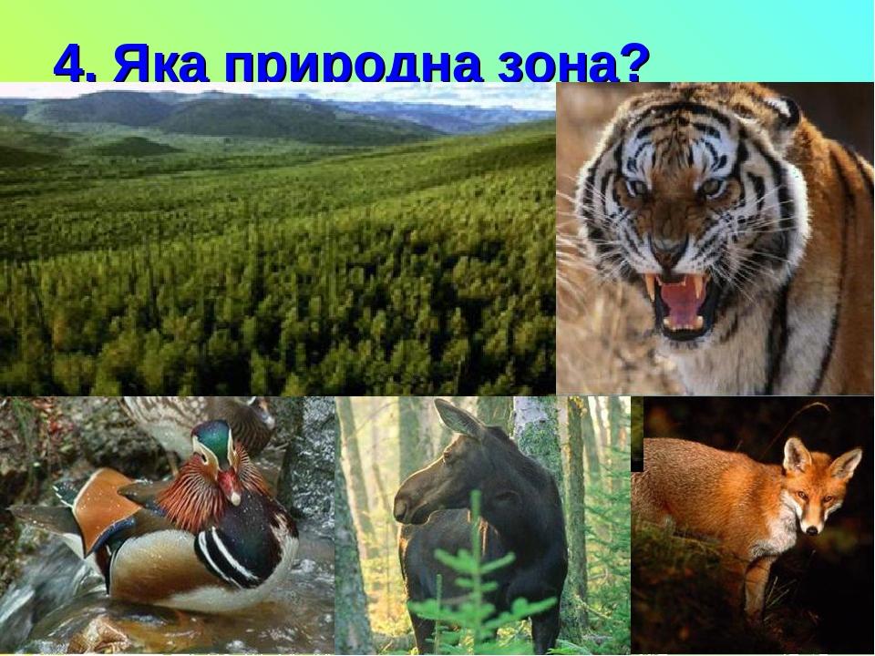 4. Яка природна зона?