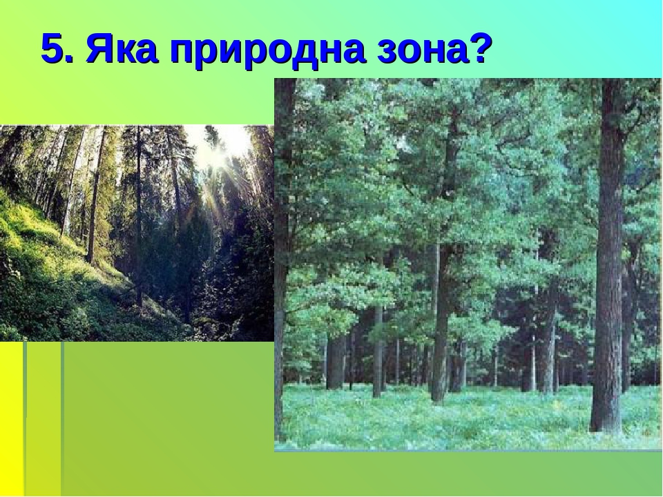 5. Яка природна зона?