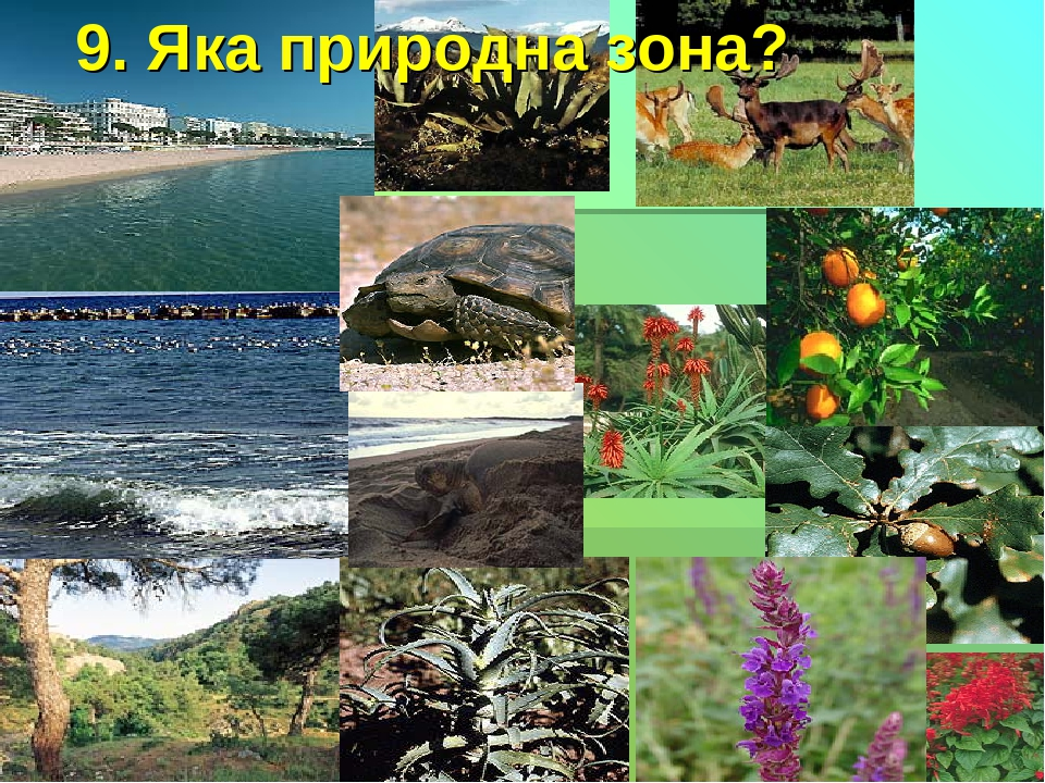 9. Яка природна зона?