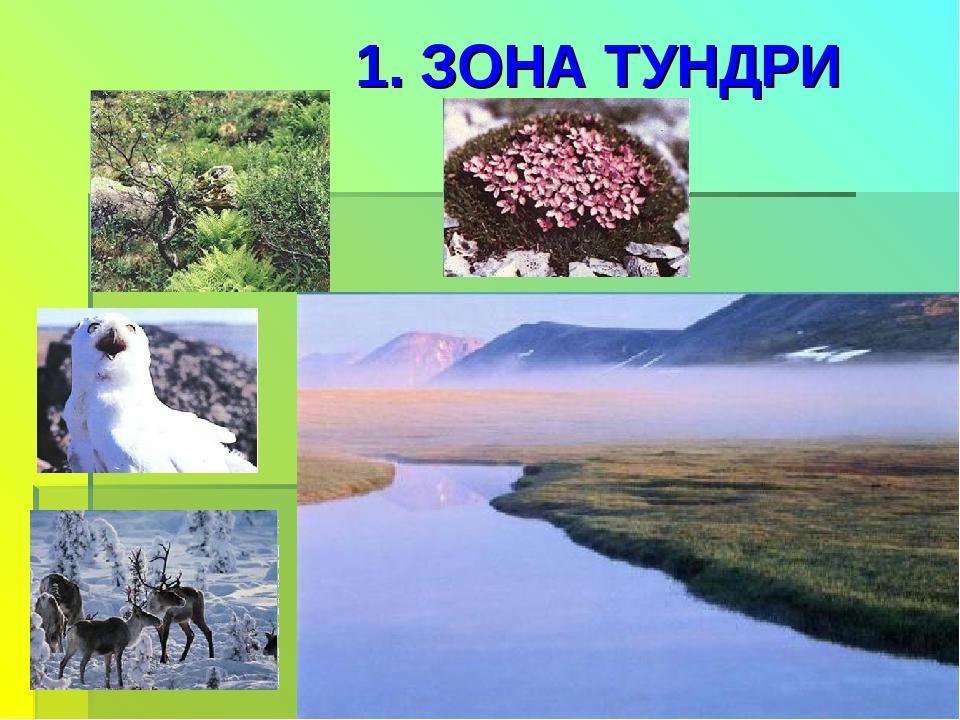 1. ЗОНА ТУНДРИ