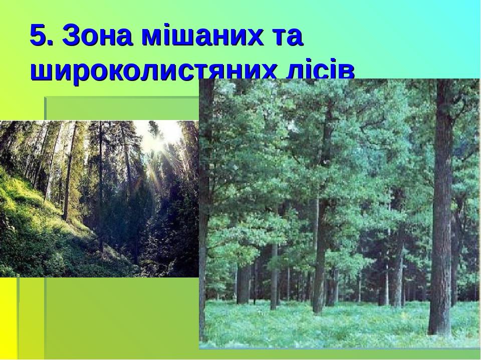 5. Зона мішаних та широколистяних лісів