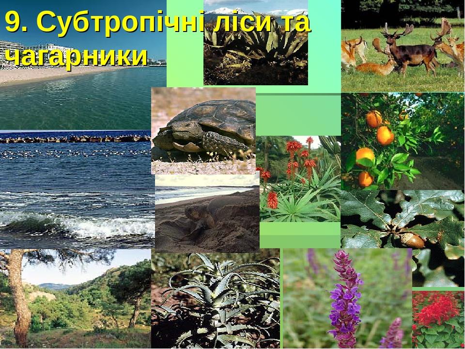 9. Субтропічні ліси та чагарники