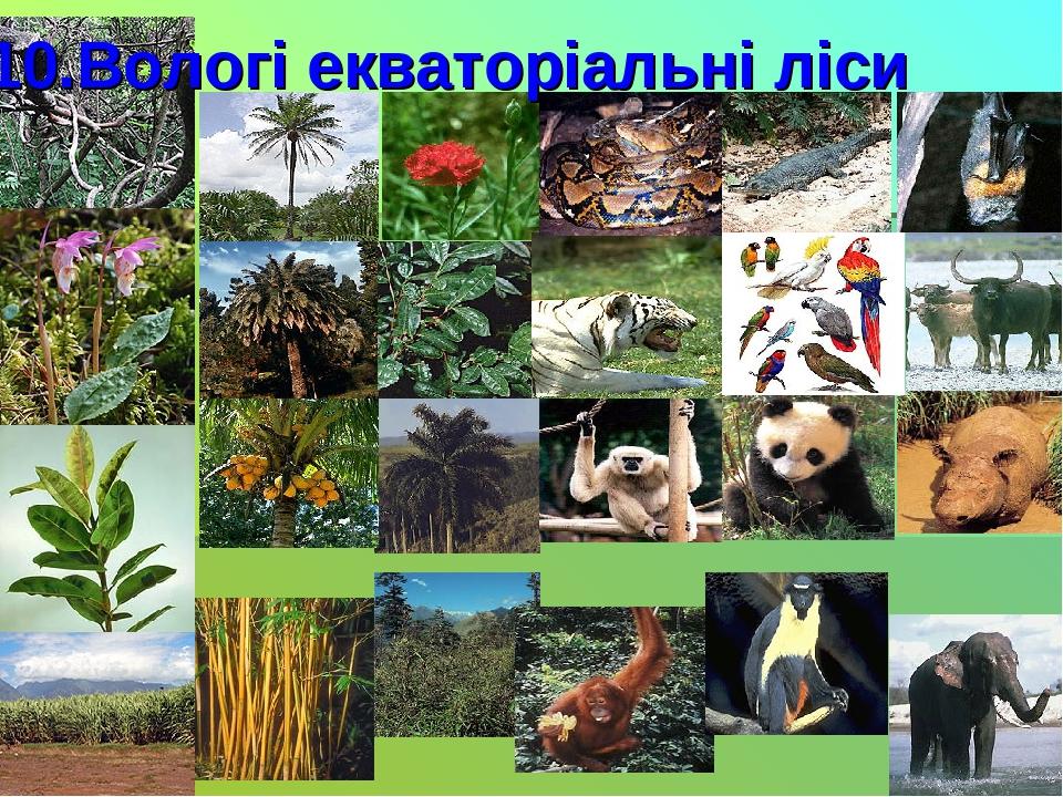 10.Вологі екваторіальні ліси