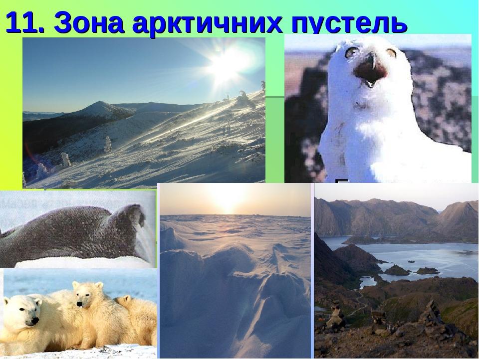 11. Зона арктичних пустель