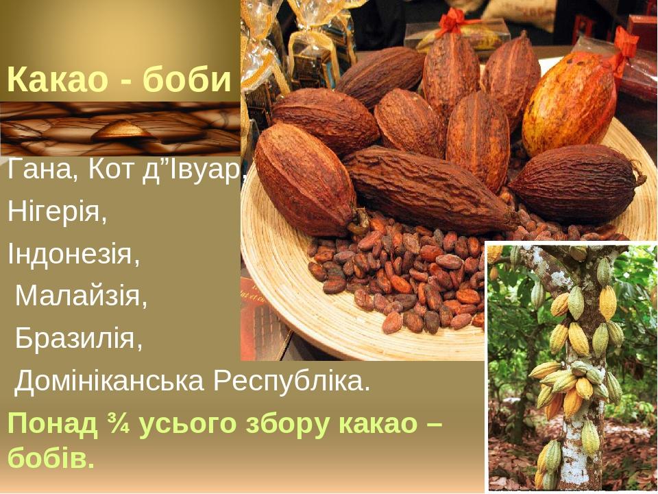 """Гана, Кот д""""Івуар, Нігерія, Індонезія, Малайзія, Бразилія, Домініканська Республіка. Понад ¾ усього збору какао – бобів."""