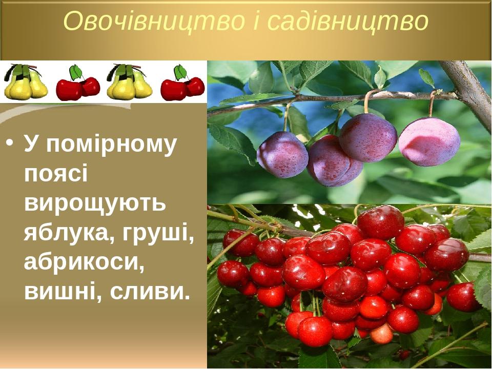 У помірному поясі вирощують яблука, груші, абрикоси, вишні, сливи.