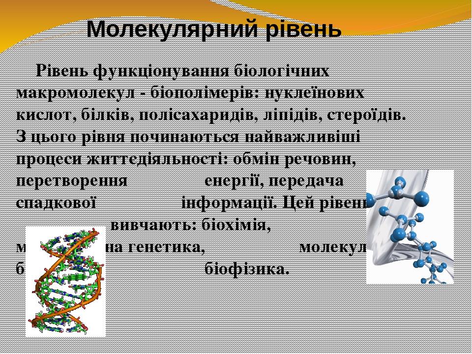 Рівень функціонування біологічних макромолекул - біополімерів: нуклеїнових кислот, білків, полісахаридів, ліпідів, стероїдів. З цього рівня починаю...