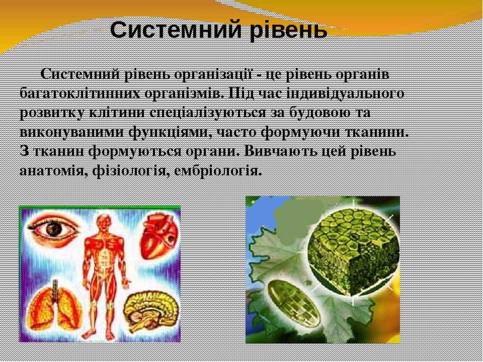 Системний рівень організації - це рівень органів багатоклітинних організмів. Під час індивідуального розвитку клітини спеціалізуються за будовою та...