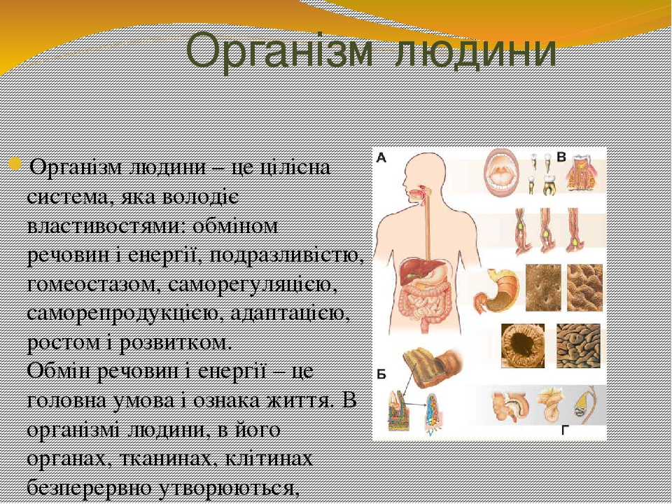 Організм людини Організм людини – це цілісна система, яка володіє властивостями: обміном речовин і енергії, подразливістю, гомеостазом, саморегуляц...
