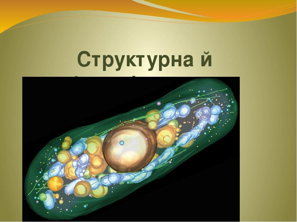 Структурна й функціональна організація клітин