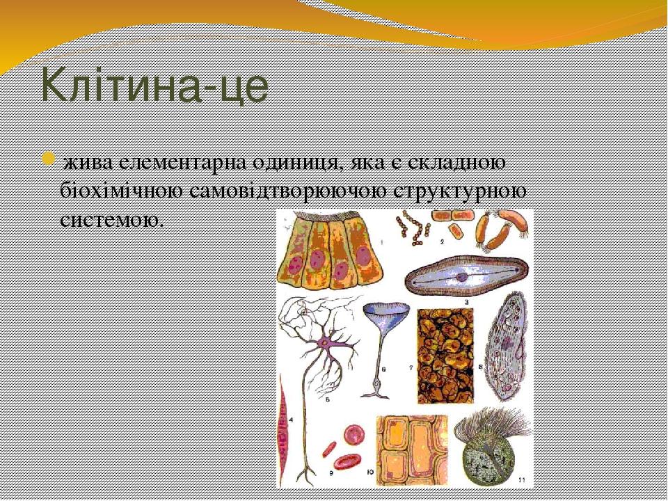 Клітина-це жива елементарна одиниця, яка є складною біохімічною самовідтворюючою структурною системою.