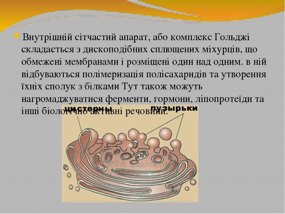 Внутрішній сітчастий апарат, або комплекс Гольджі складається з дископодібних сплющених міхурців, що обмежені мембранами і розміщені один над одним...