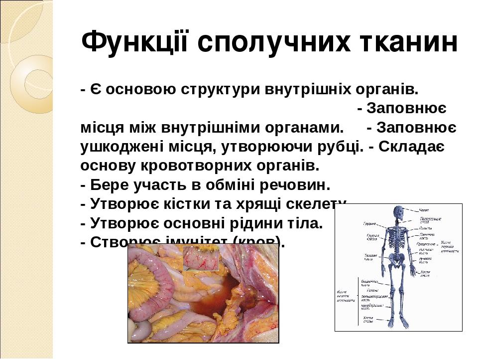 Функції сполучних тканин - Є основою структури внутрішніх органів. - Заповнює місця між внутрішніми органами. - Заповнює ушкоджені місця, утворюючи...