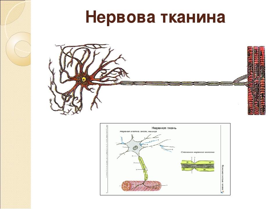 Нервова тканина