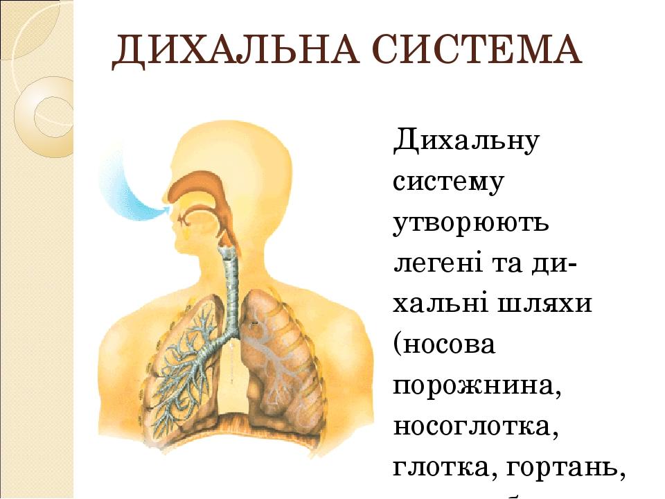 ДИХАЛЬНА СИСТЕМА Дихальну систему утворюють легені та дихальні шляхи (носова порожнина, носоглотка, глотка, гортань, трахея, бронхи, бронхіоли, ал...