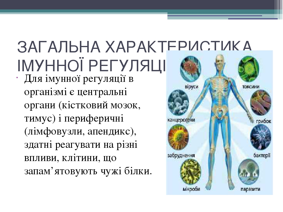 ЗАГАЛЬНА ХАРАКТЕРИСТИКА ІМУННОЇ РЕГУЛЯЦІЇ ЛЮДИНИ Для імунної регуляції в організмі є центральні органи (кістковиймозок, тимус) і периферичні (лімф...