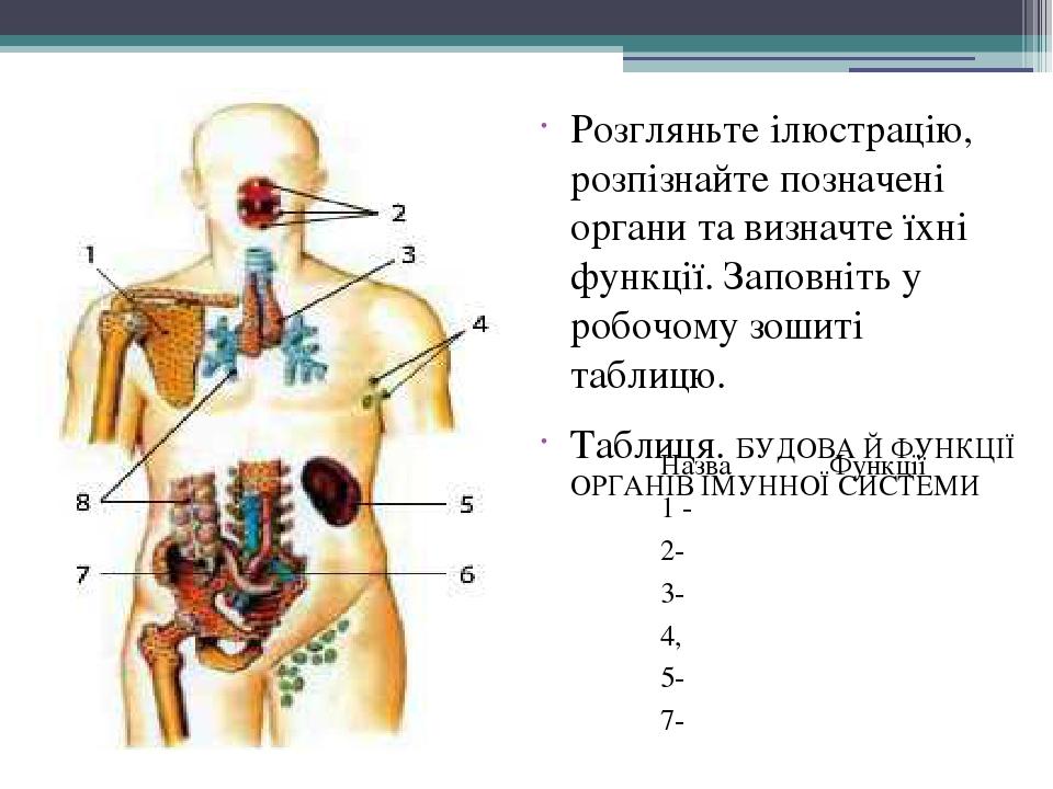 Розгляньте ілюстрацію, розпізнайте позначені органи та визначте їхні функції. Заповніть у робочому зошиті таблицю. Таблиця. БУДОВА Й ФУНКЦІЇ ОРГАНІ...