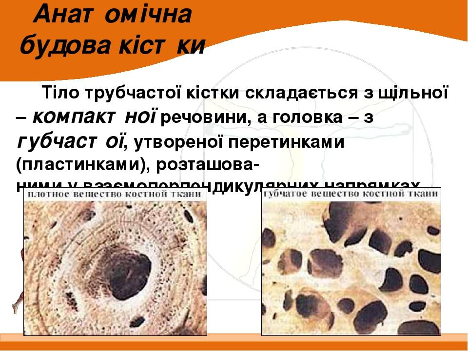 Анатомічна будова кістки Тіло трубчастої кістки складається з щільної – компактної речовини, а головка – з губчастої, утвореної перетинками (пласти...