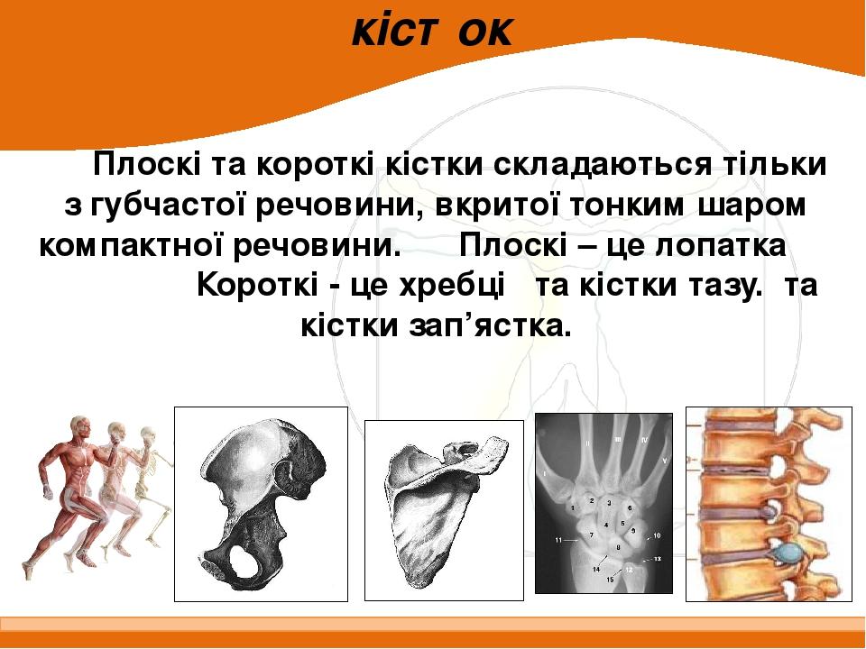 Будова плоских і коротких кісток Плоскі та короткі кістки складаються тільки з губчастої речовини, вкритої тонким шаром компактної речовини. Плоскі...