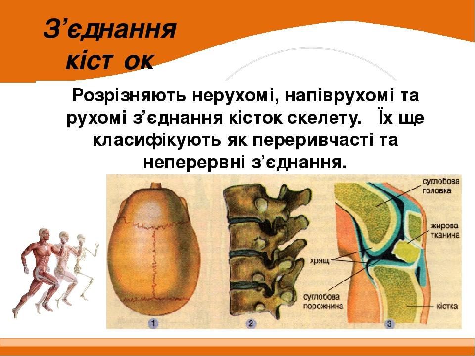 З'єднання кісток Розрізняють нерухомі, напіврухомі та рухомі з'єднання кісток скелету. Їх ще класифікують як переривчасті та неперервні з'єднання.