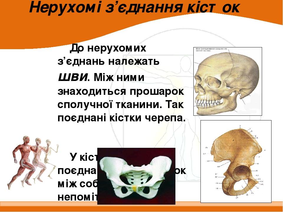 Нерухомі з'єднання кісток До нерухомих з'єднань належать шви. Між ними знаходиться прошарок сполучної тканини. Так поєднані кістки черепа. У кістка...