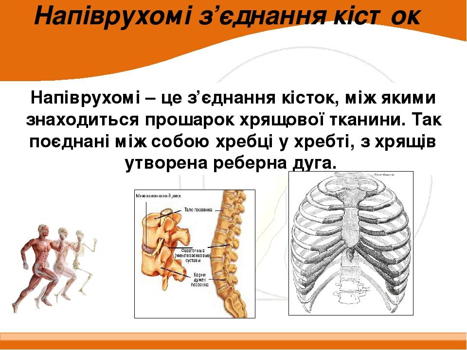 Напіврухомі з'єднання кісток Напіврухомі – це з'єднання кісток, між якими знаходиться прошарок хрящової тканини. Так поєднані між собою хребці у хр...