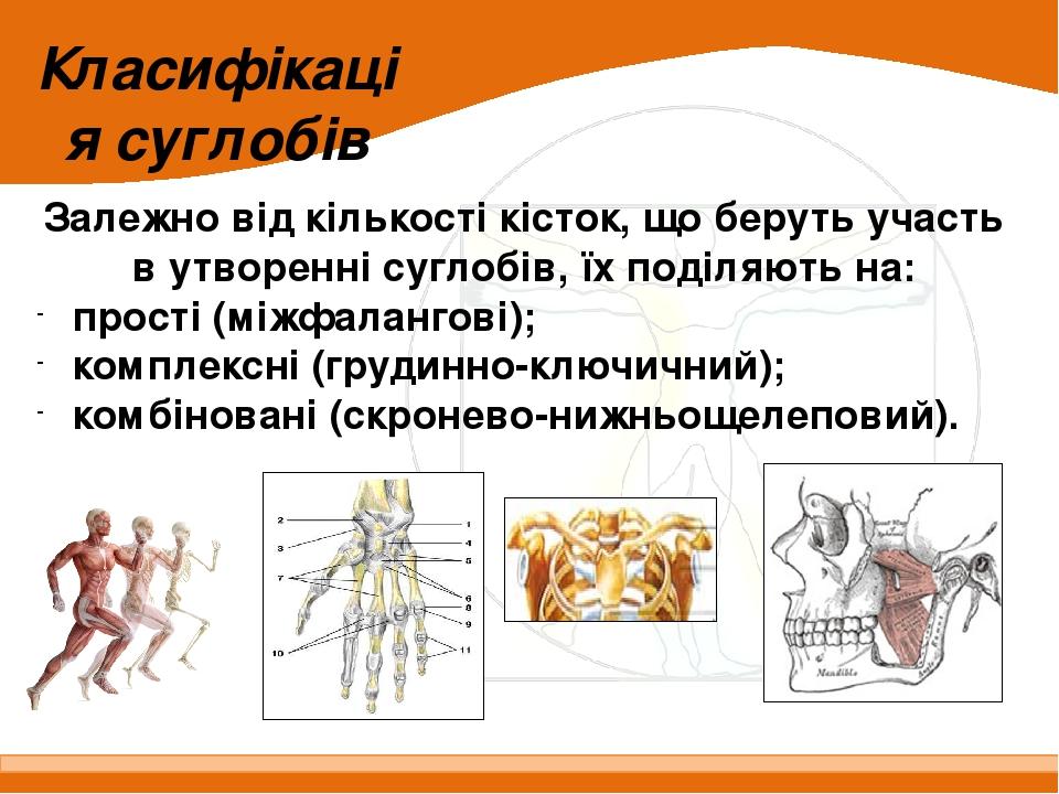 Класифікація суглобів Залежно від кількості кісток, що беруть участь в утворенні суглобів, їх поділяють на: прості (міжфалангові); комплексні (груд...