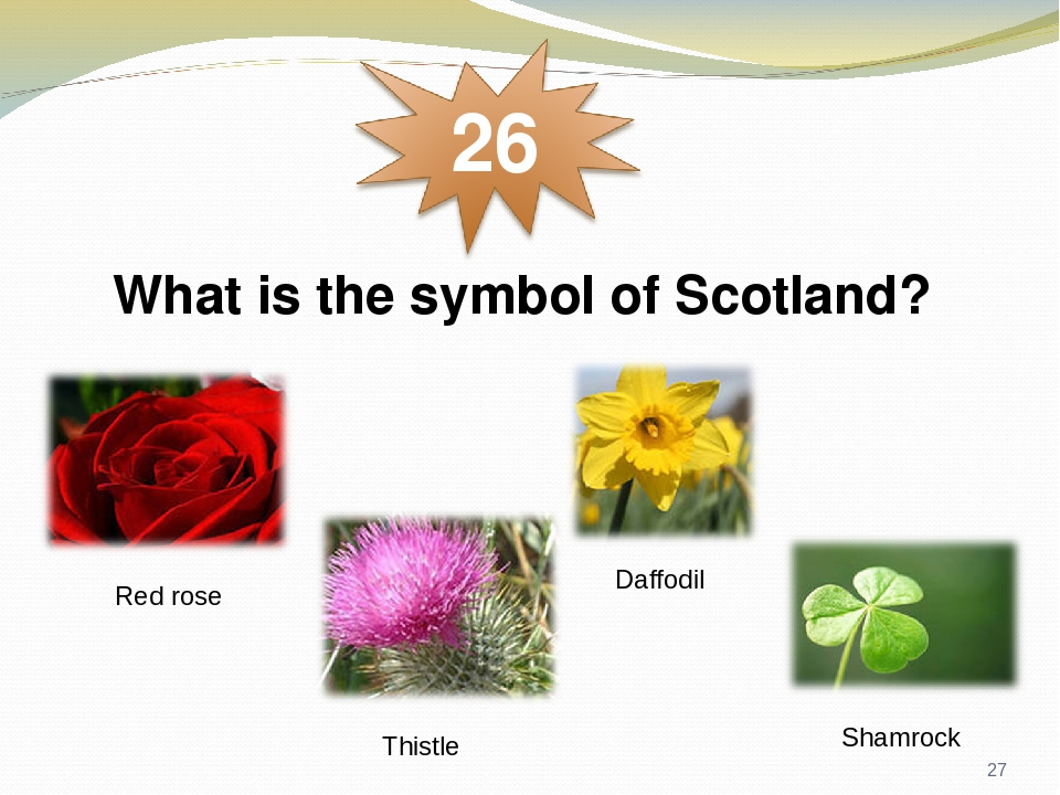 What is the symbol of Scotland? Red rose Thistle Daffodil Shamrock *