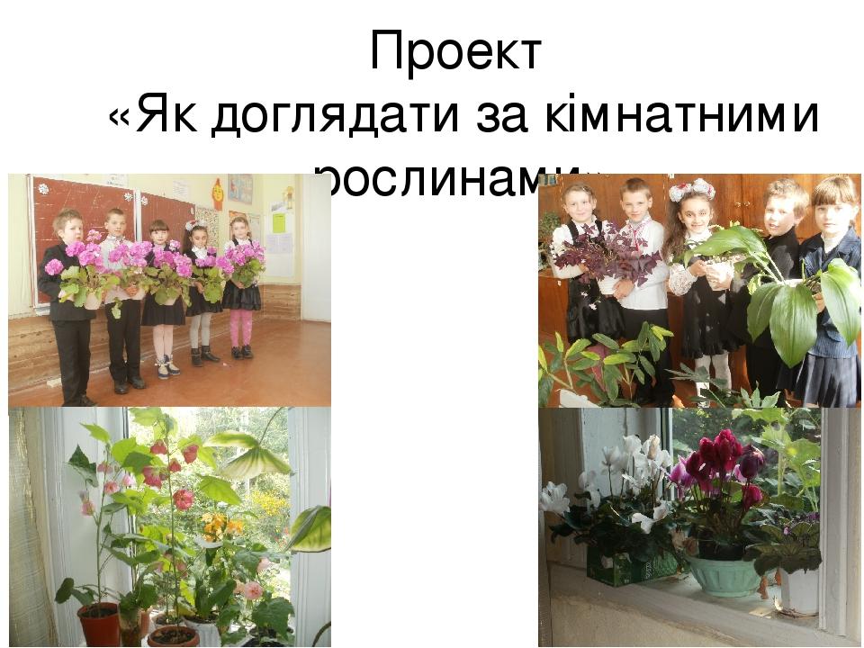 Проект «Як доглядати за кімнатними рослинами»