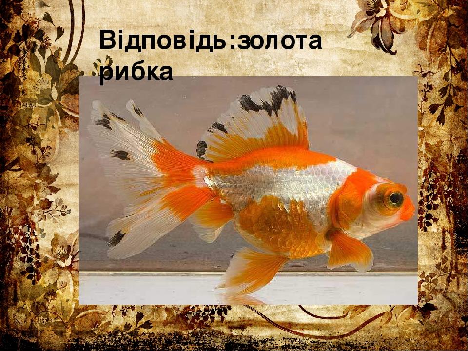Відповідь:золота рибка