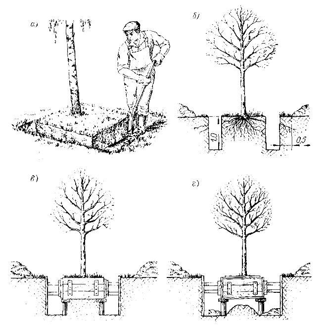 Методы выращивания леса 100