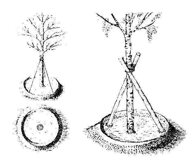 Методы выращивания леса 98