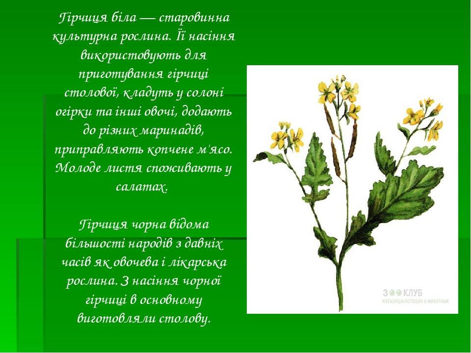 Гірчиця біла— старовинна культурна рослина. Її насіння використовують для приготування гірчиці столової, кладуть у солоні огірки та інші овочі, до...
