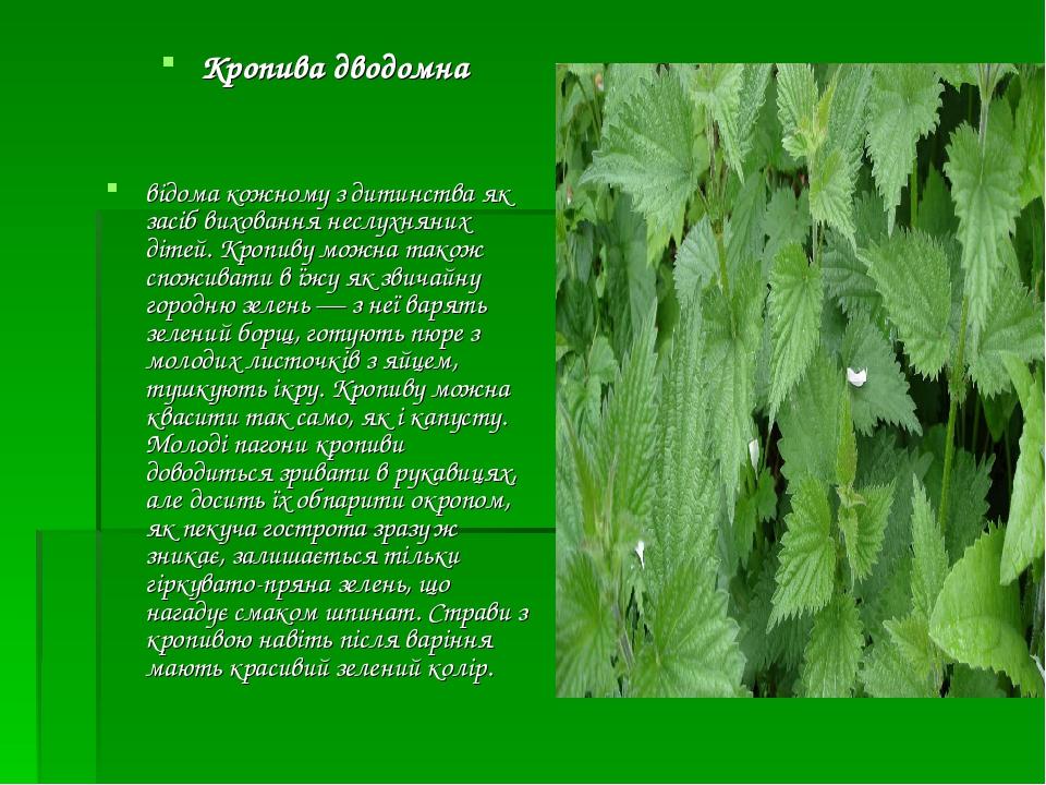 Кропива дводомна відома кожному з дитинства як засіб виховання неслухняних дітей. Кропиву можна також споживати в їжу як звичайну городню зелень —...