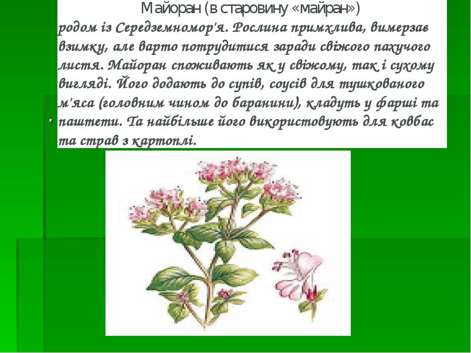 . Майоран (в старовину «майран») родом із Середземномор'я. Рослина примхлива, вимерзає взимку, але варто потрудитися заради свіжого пахучого листя...