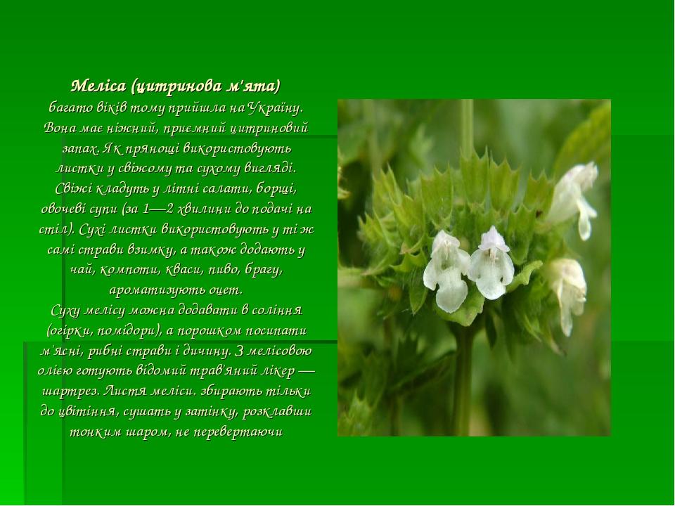 Меліса (цитринова м'ята) багато віків тому прийшла на Україну. Вона має ніжний, приємний цитриновий запах. Як прянощі використовують листки у свіж...