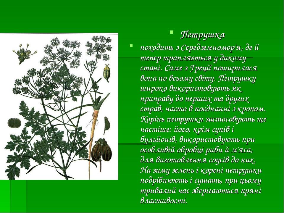Петрушка походить з Середземномор'я, де й тепер трапляється у дикому стані. Саме з Греції поширилася вона по всьому світу. Петрушку широко викорис...