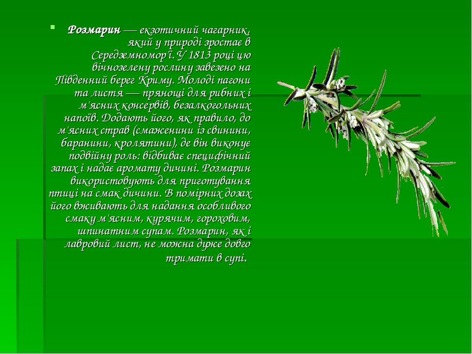 Розмарин— екзотичний чагарник, який у природі зростає в Середземномор'ї. У 1813 році цю вічнозелену рослину завезено на Південний берег Криму. Мол...