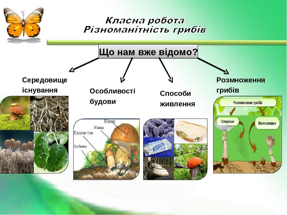 Що нам вже відомо? Середовище існування Особливості будови Способи живлення Розмноження грибів