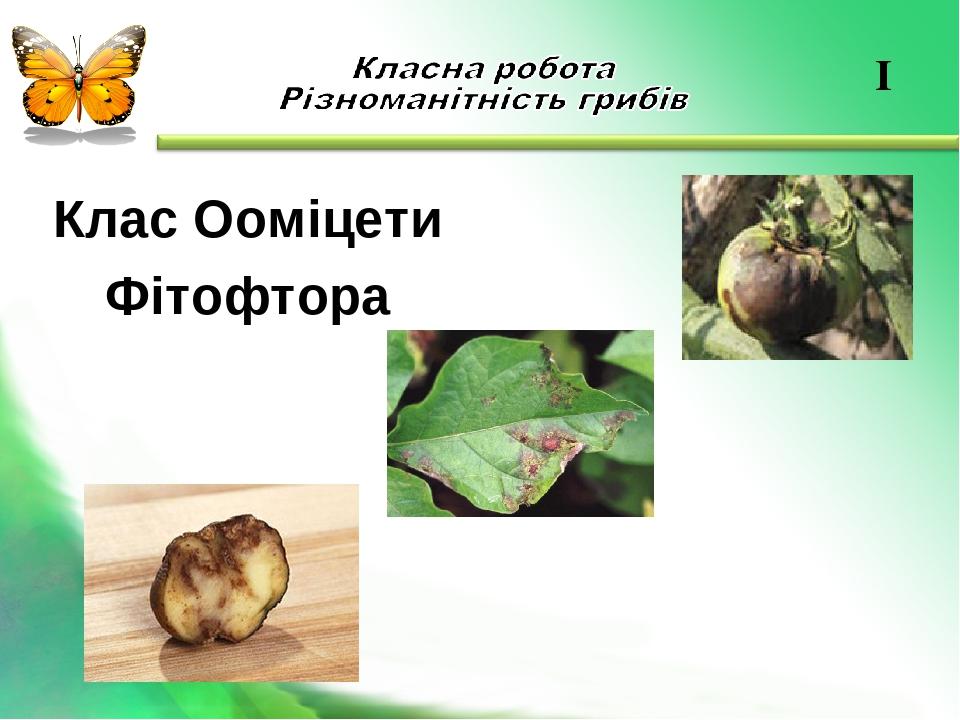 Клас Ооміцети Фітофтора I