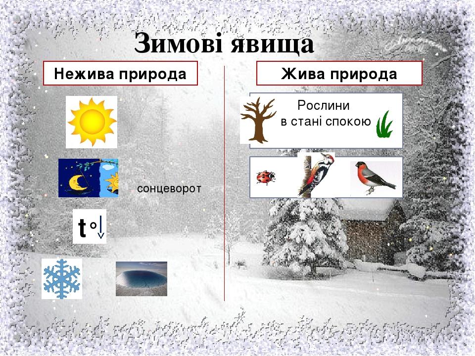 Зимові явища Нежива природа Жива природа t° сонцеворот Рослини в стані спокою