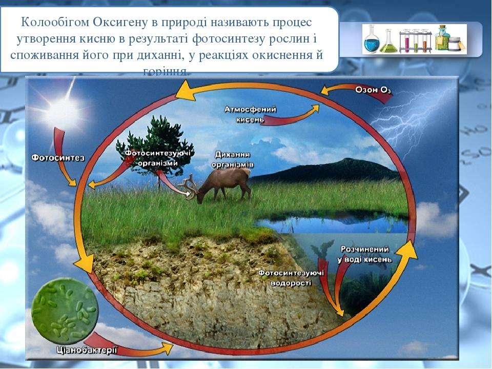 Колообігом Оксигену в природі називають процес утворення кисню в результаті фотосинтезу рослин і споживання його при диханні, у реакціях окиснення ...