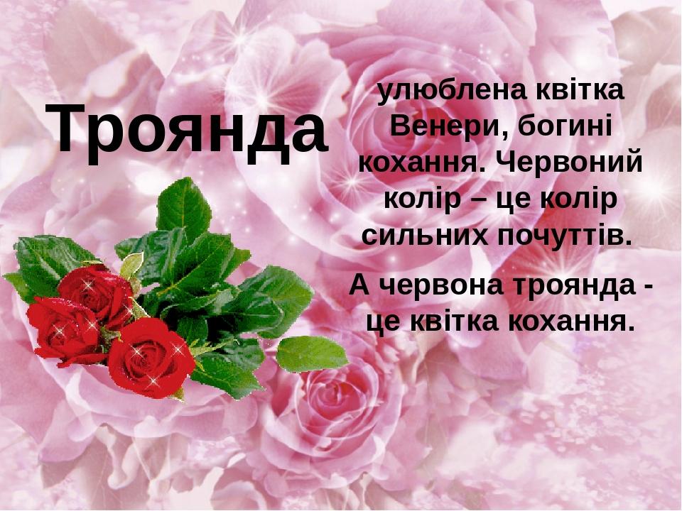 улюблена квітка Венери, богині кохання. Червоний колір – це колір сильних почуттів. А червона троянда - це квітка кохання. Троянда