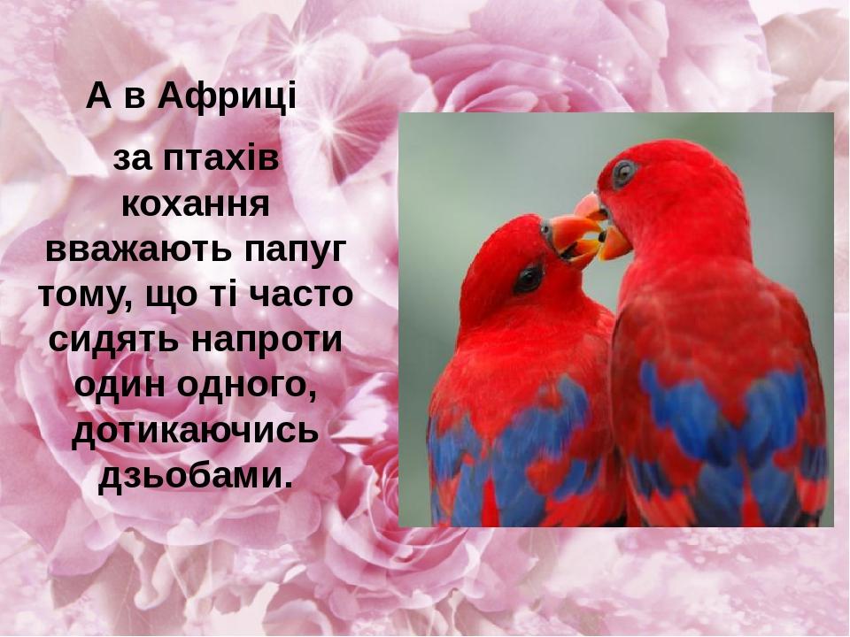 А в Африці за птахів кохання вважають папуг тому, що ті часто сидять напроти один одного, дотикаючись дзьобами.