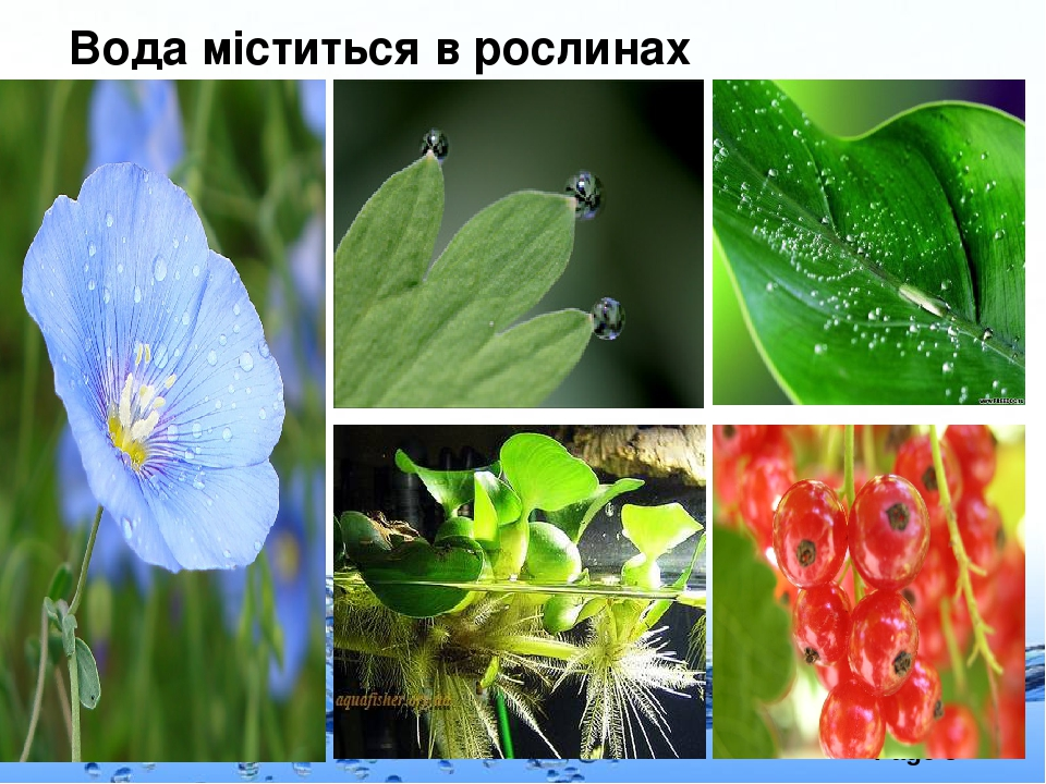 Вода міститься в рослинах Page