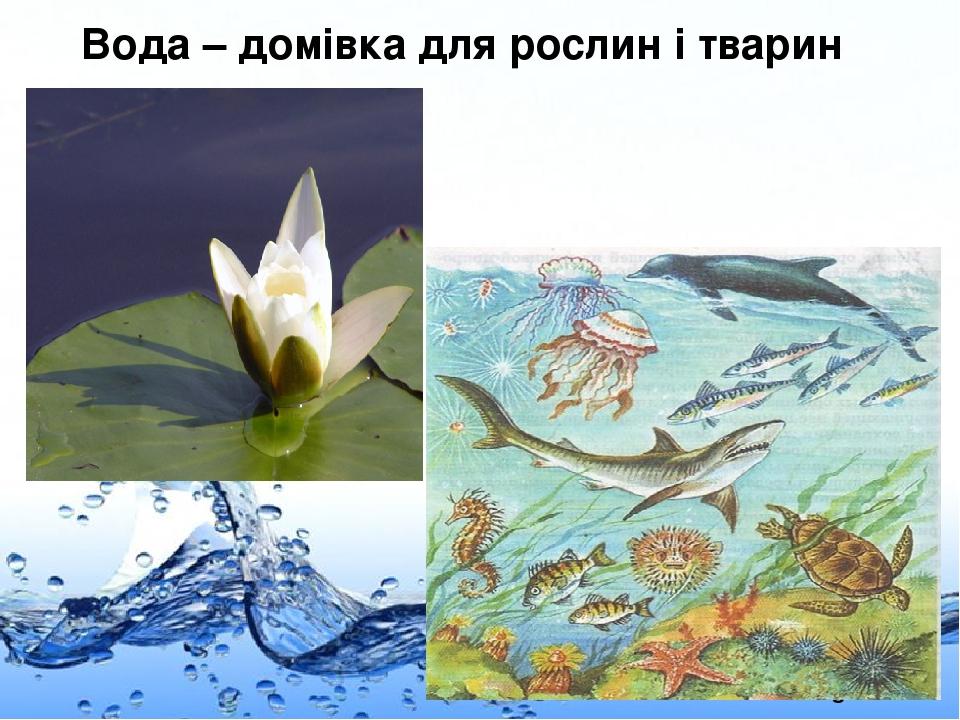 Вода – домівка для рослин і тварин Page